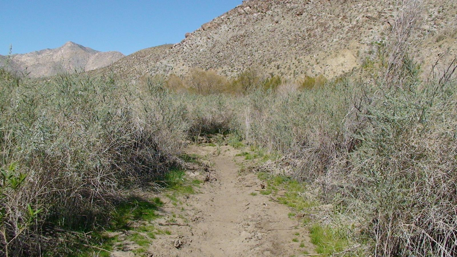 Photo de California Borrego Springs Lower Willows Trail