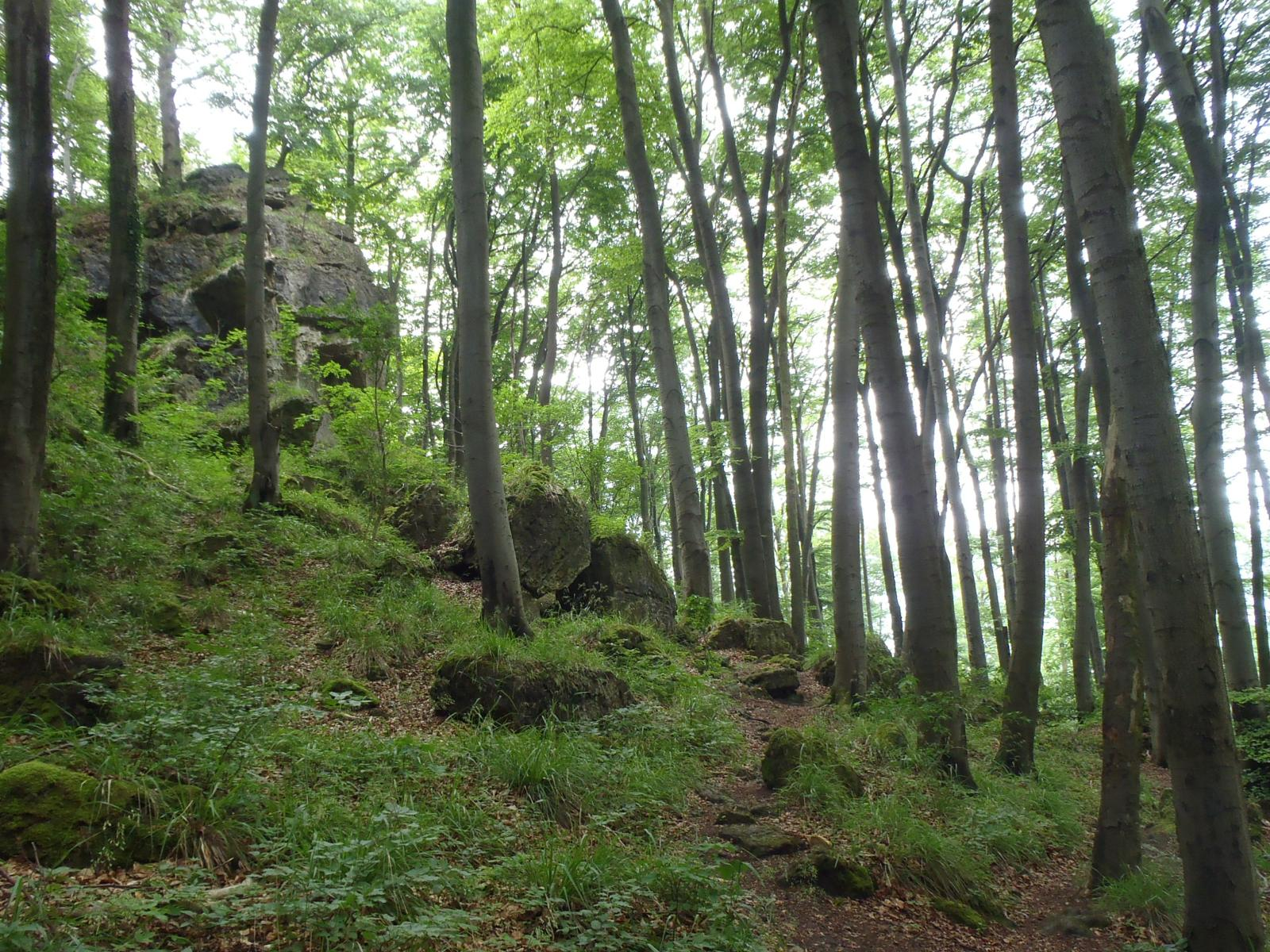 mynd af Ith and Duinger Wald