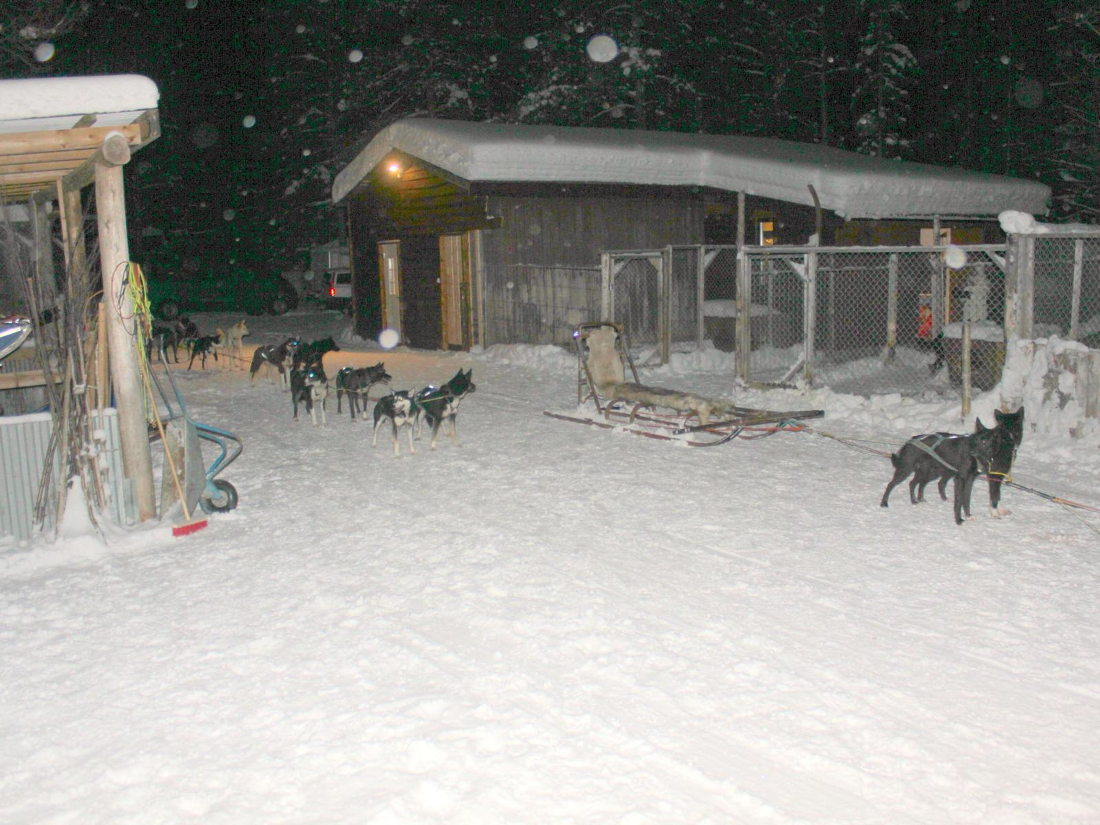 Foto de Dog Sled Run