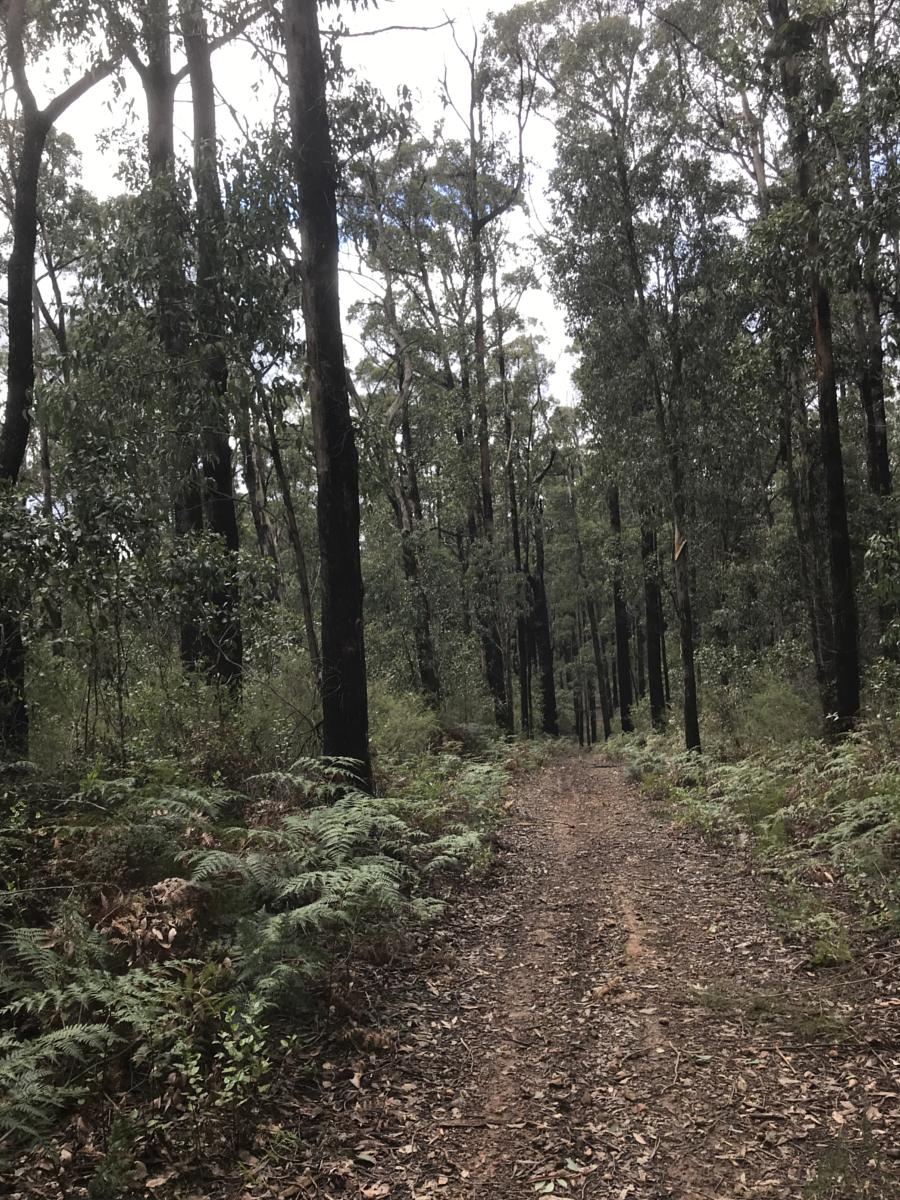 Photo of Kinglake East - Andrew Hill Curcuit