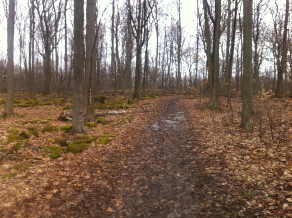 Foto von Bruce Trail & Louth Side Trail Loop (Staff Ave)