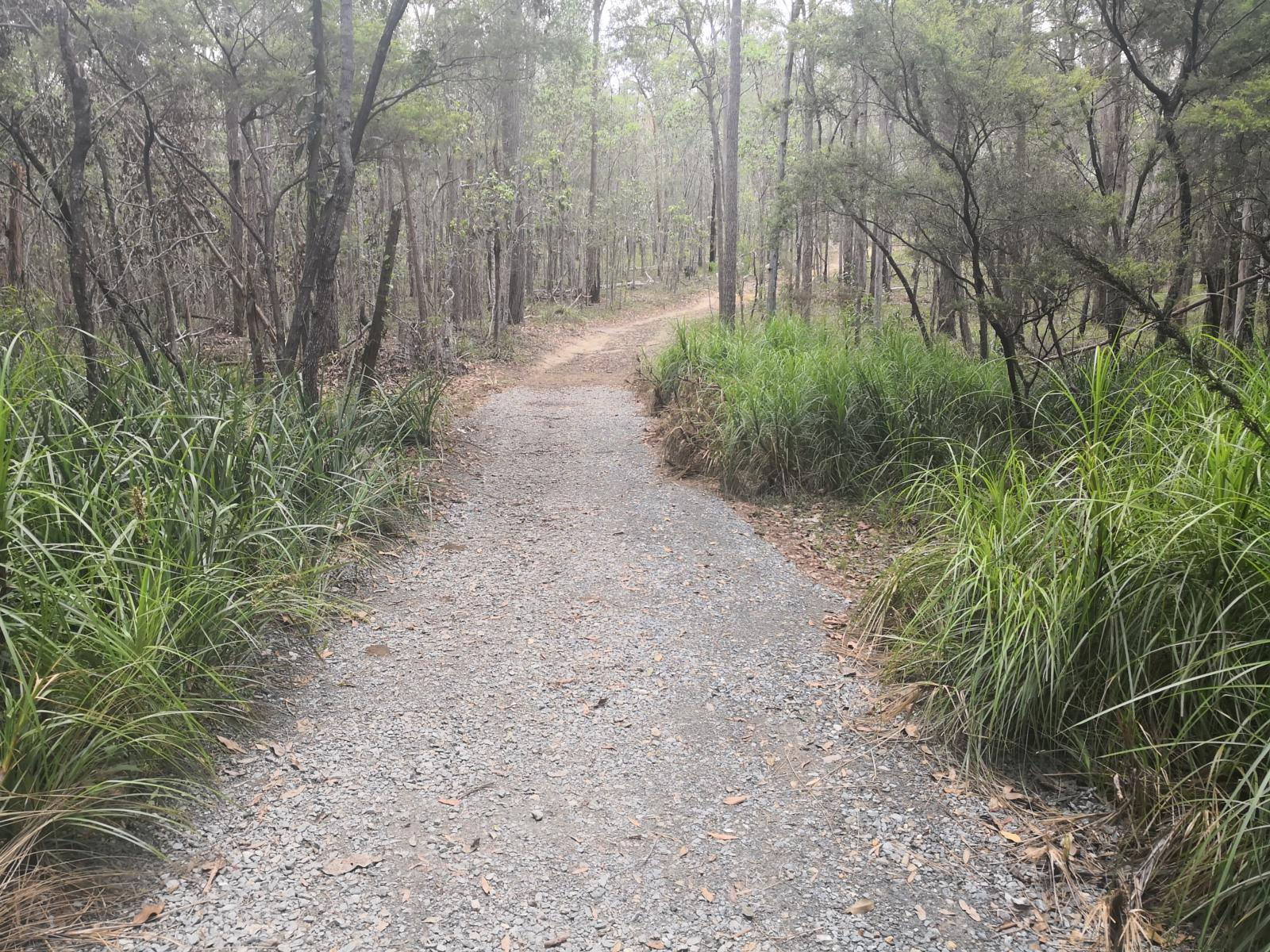 Слика од Daisy Hill Forest Fire Trails to Quarry, Daisy Hill Forest QLD