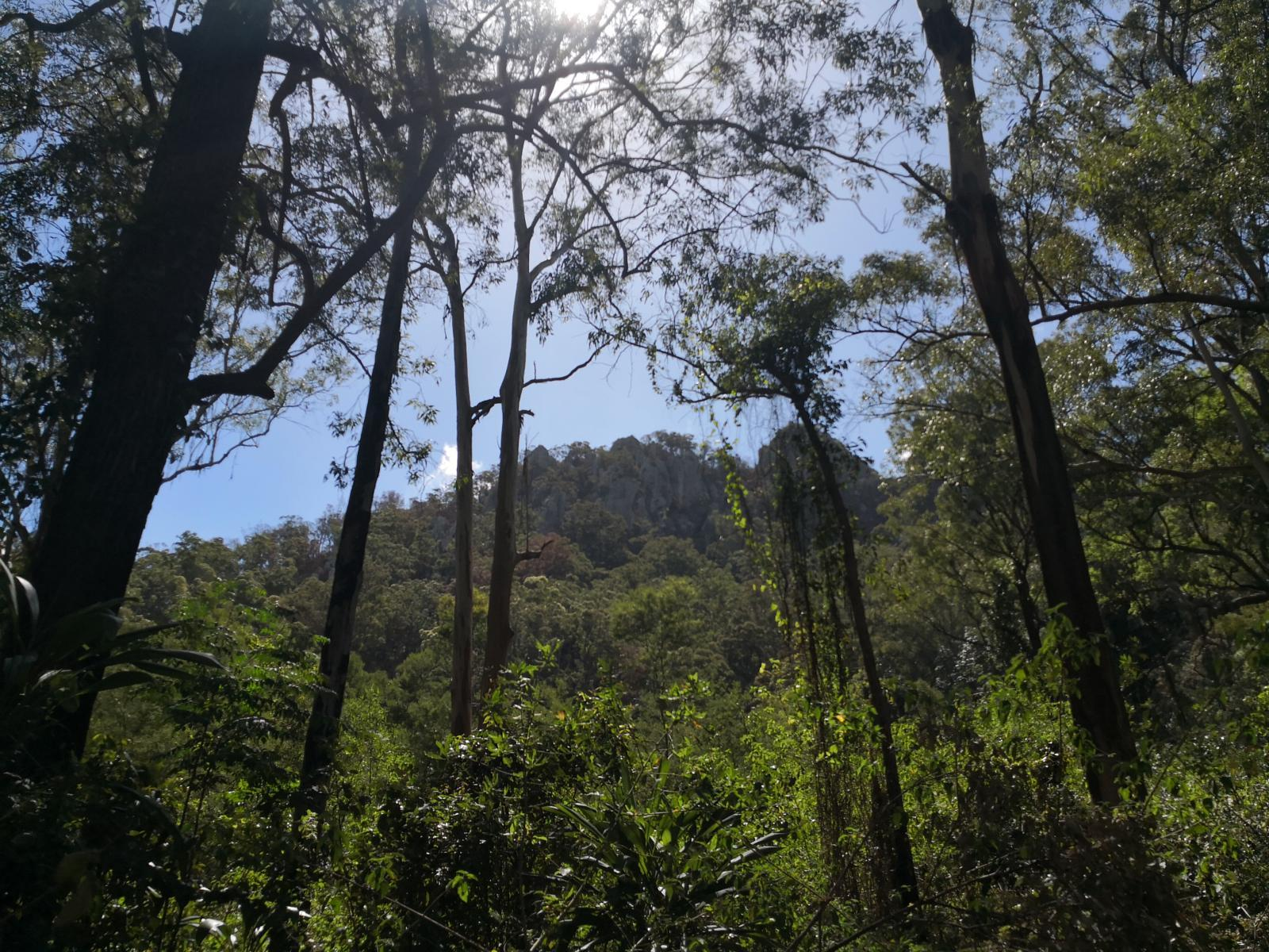 Слика од Flinders Peak Secret Caves Circuit via Scott's Track, Scenic Rim QLD