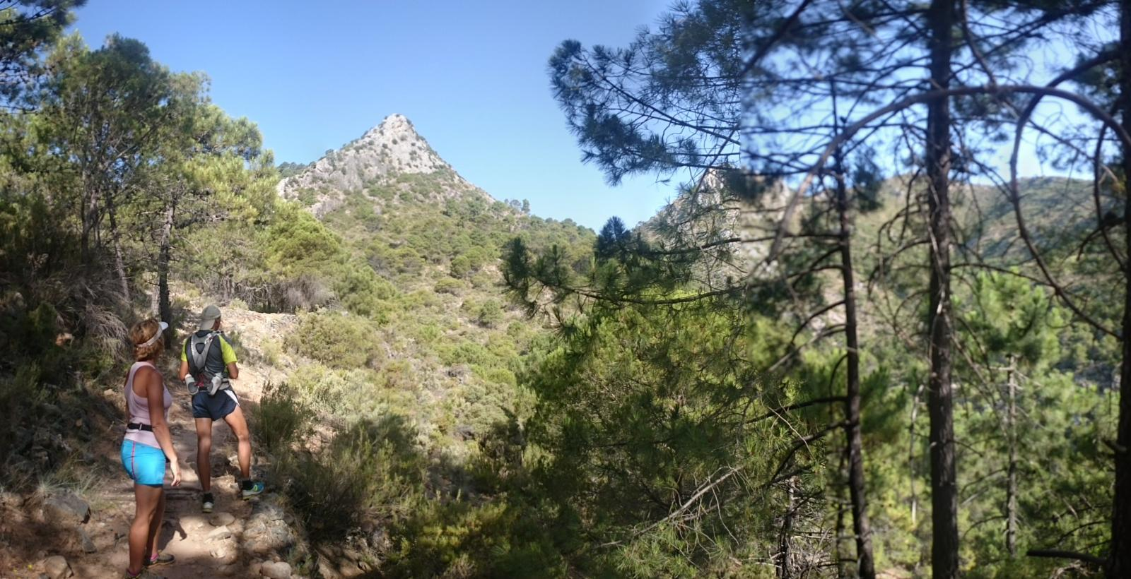 Photo of Cerezal - Mirador del Corzo - Castañar del Cerezal (Ojen, Malaga) (30-06-2015)