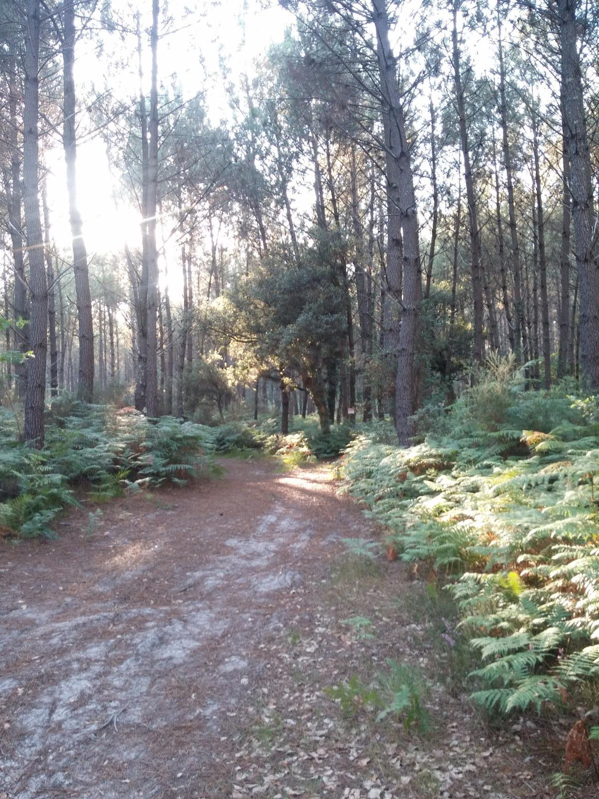 Photo of Ruta MTB por pistas forestales (Vieux Boucau & Messanges, France)