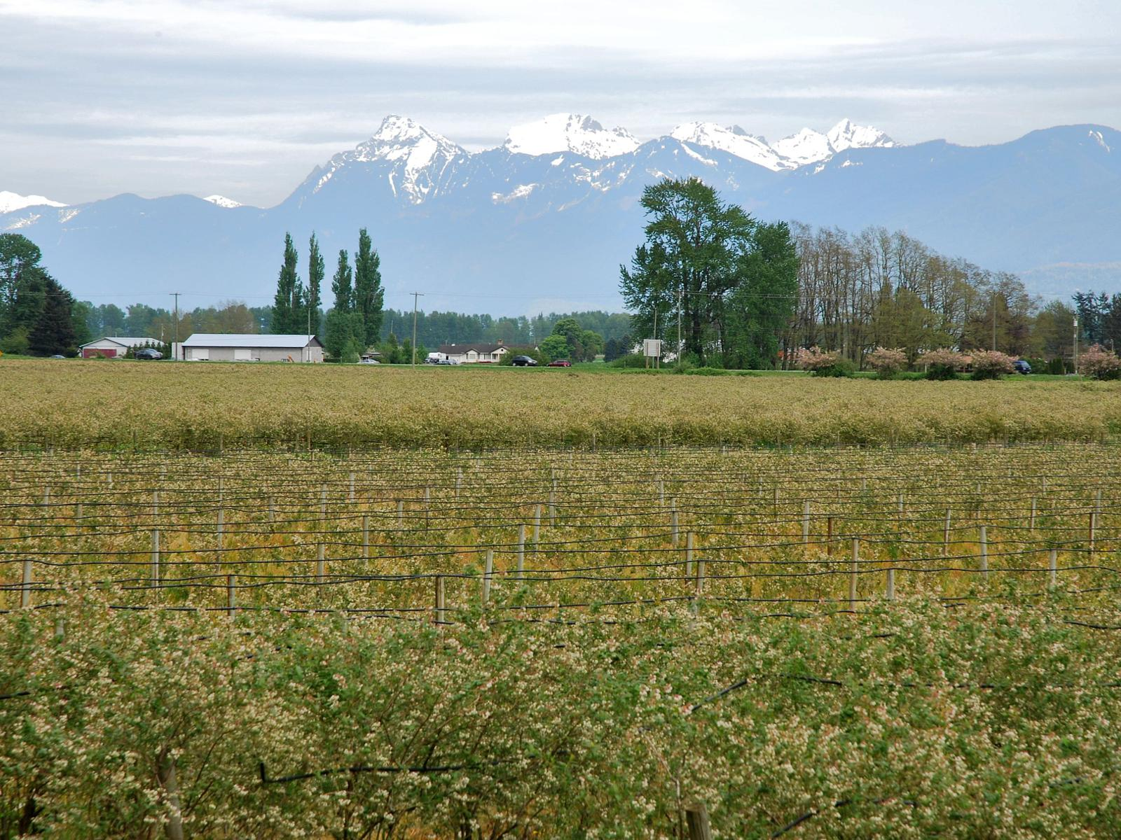 Foto de Arnold, BC, and the Chilliwack and Sumas Rivers