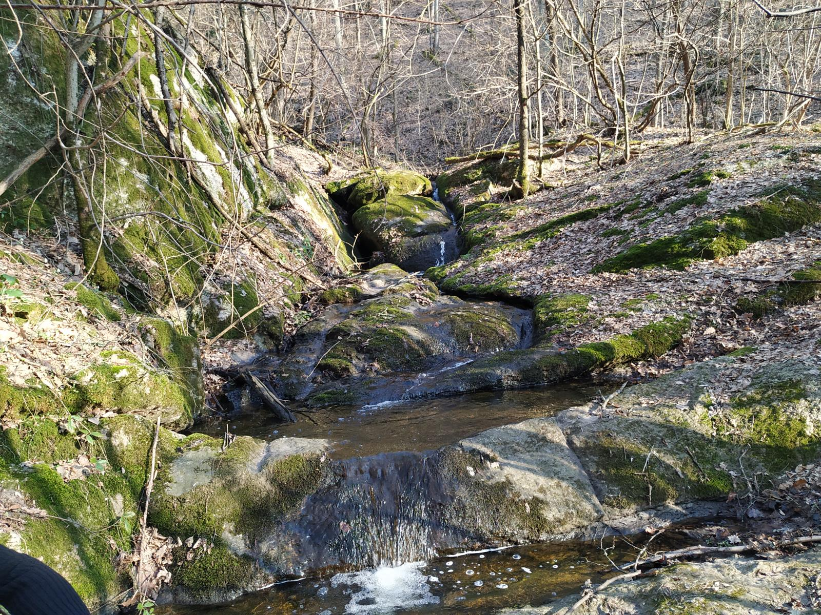 Слика од Forest stream and waterfalls