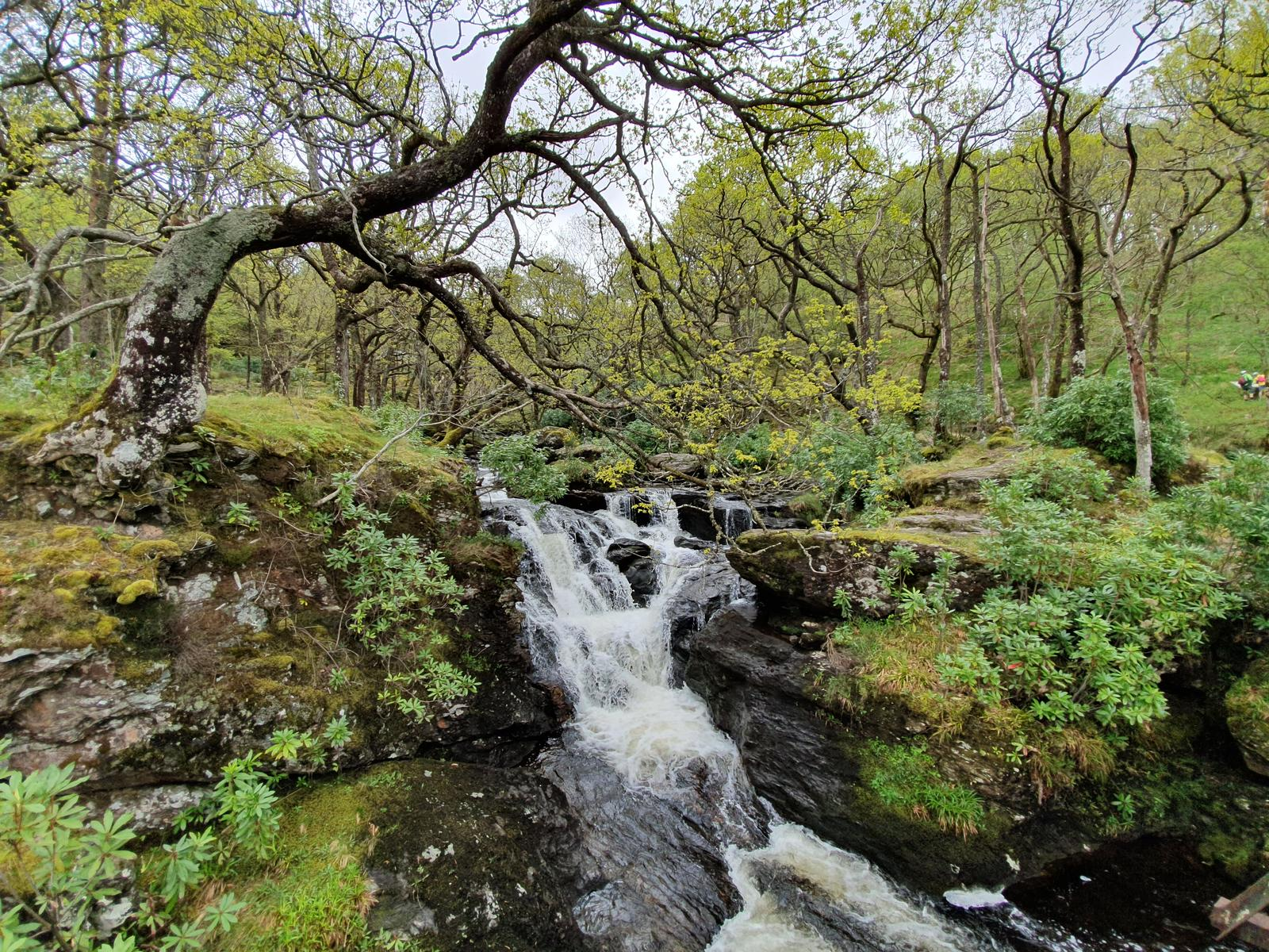 Foto di WEST HIGHLAND WAY 3/7 - Rowardennan / Inverarnan