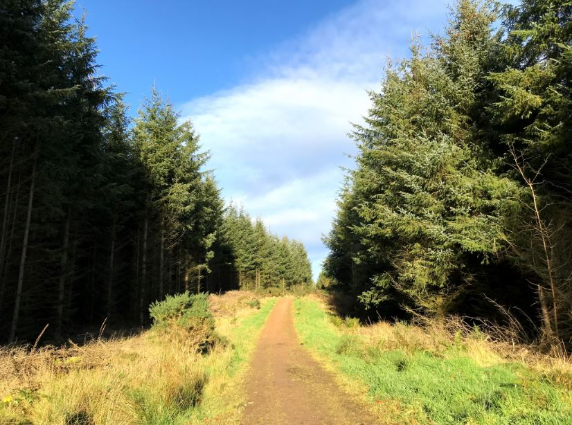 Foto di Forest of Deer-Loudon Stone Circle Loop (Aberdeenshire)