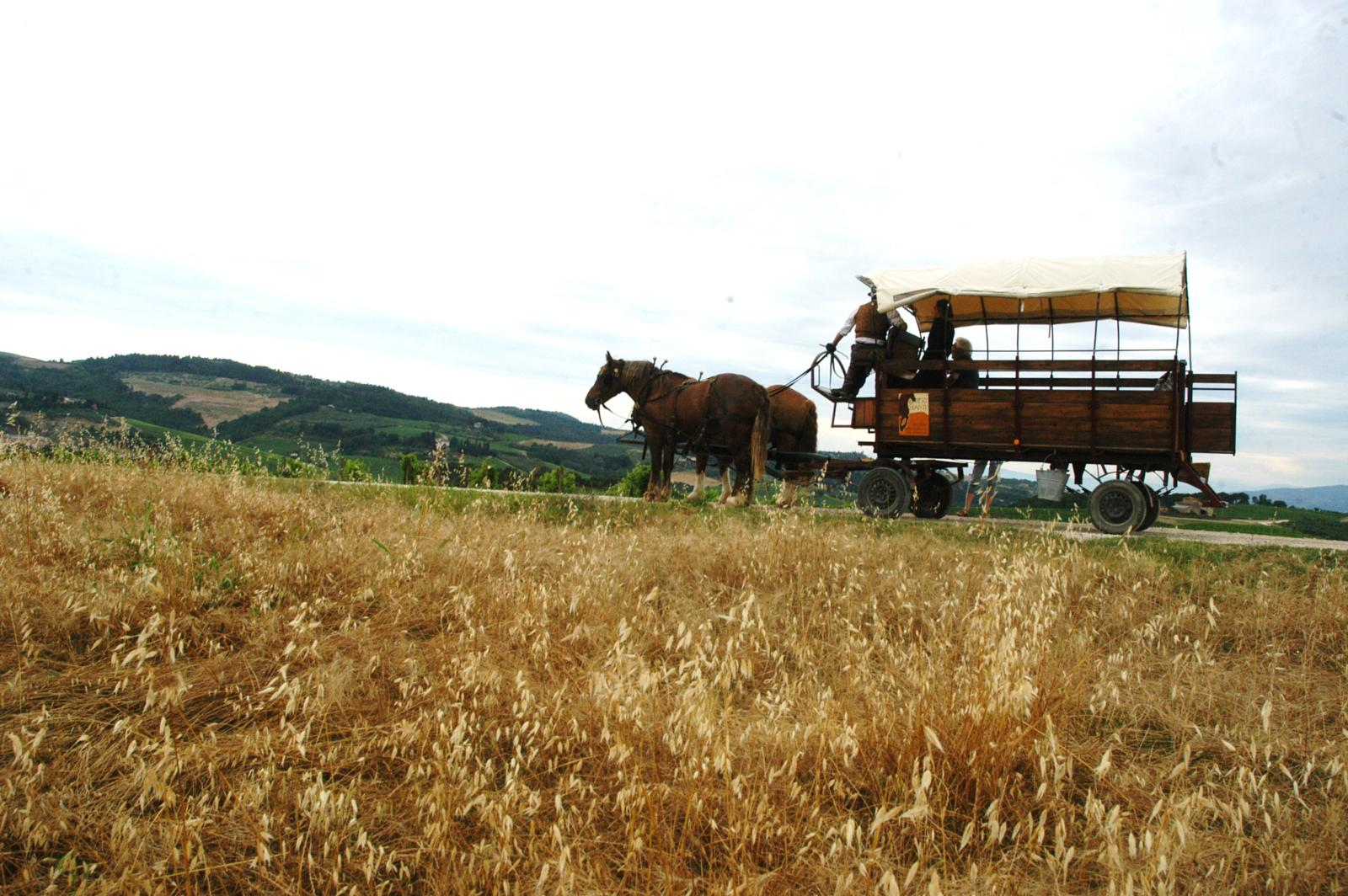 Foto di 3 days with Carriage Rides in Tuscany'