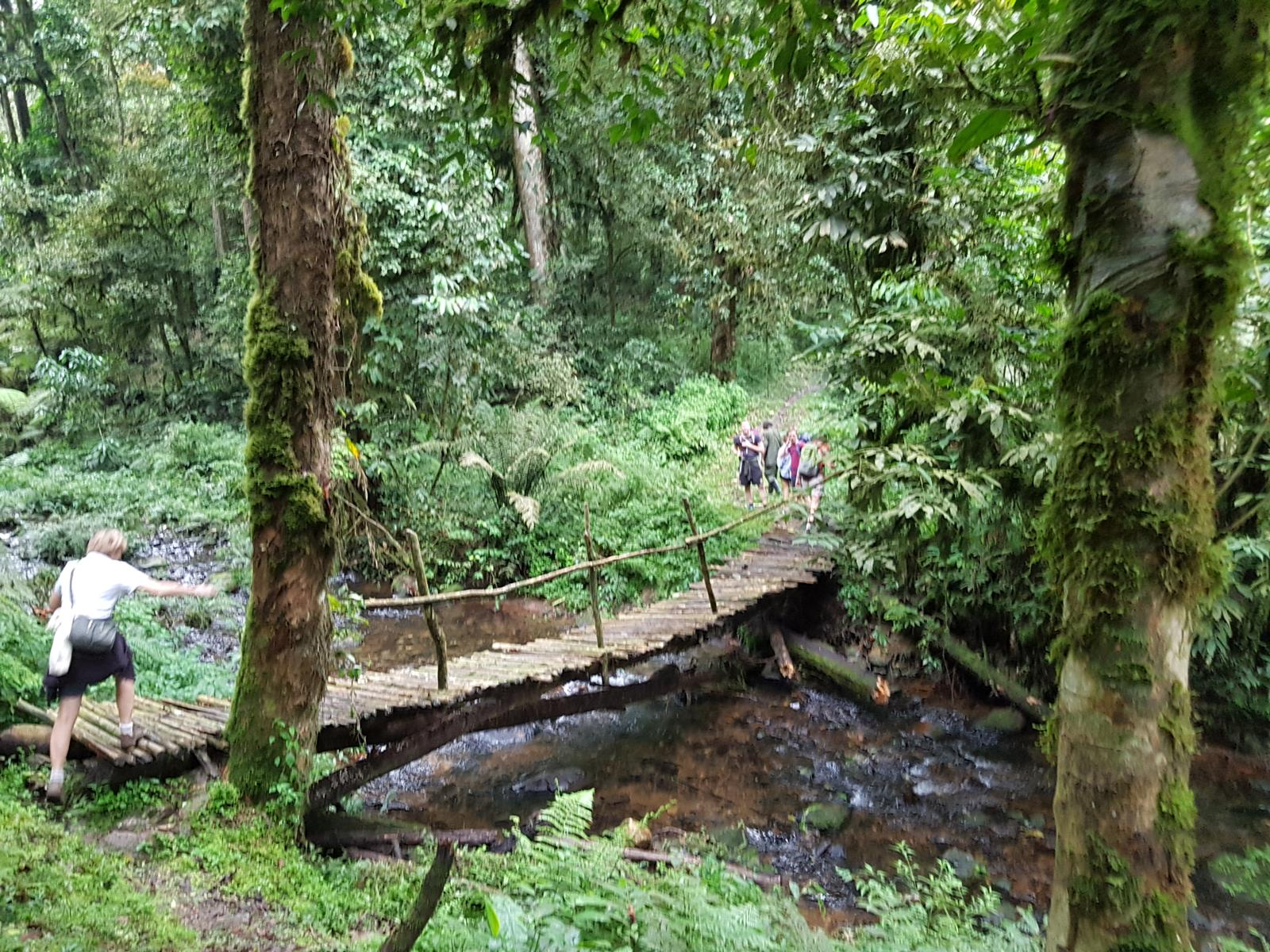 Photo of Bwindi
