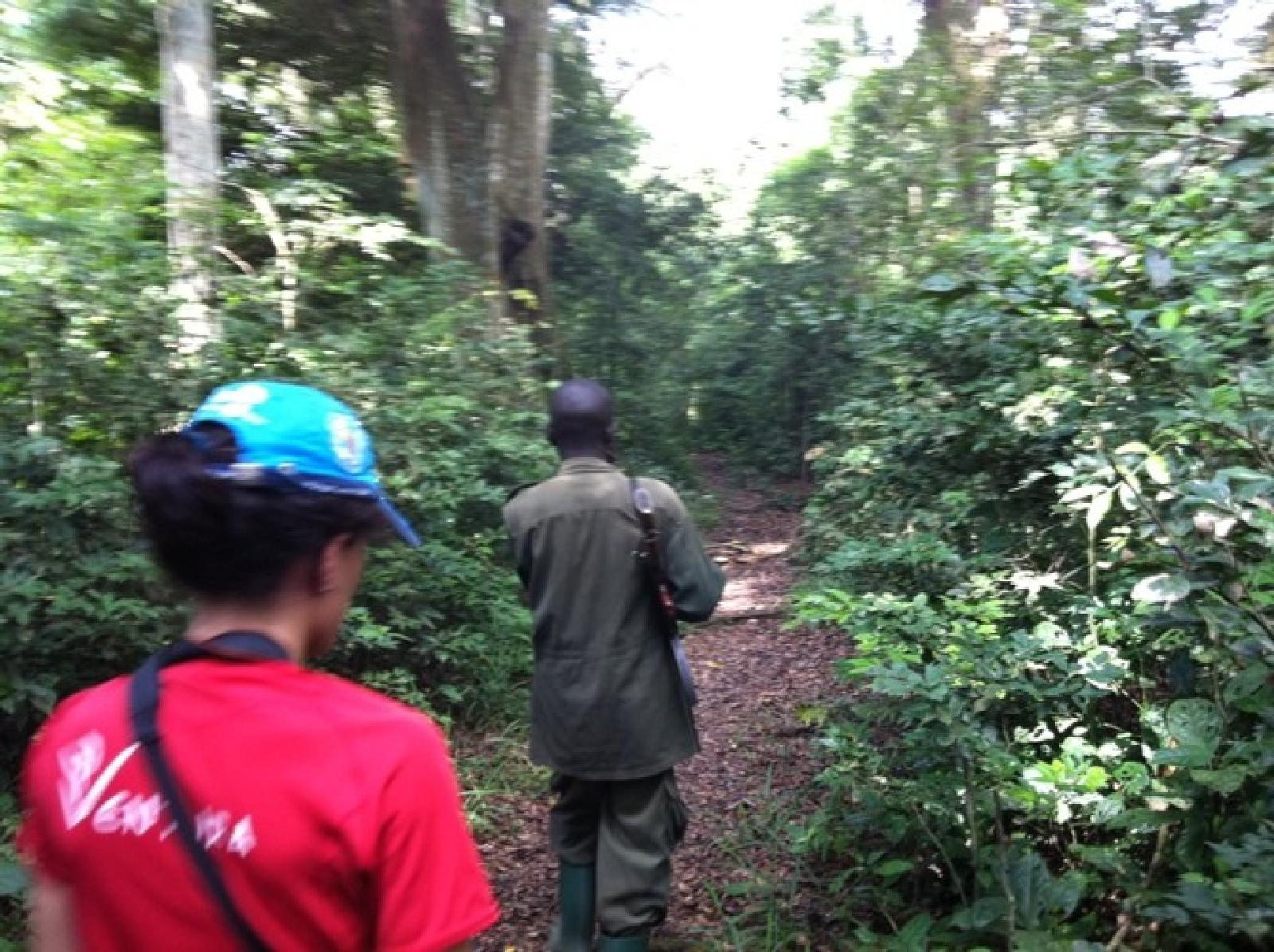 Foto de Primer Chimp Tracking en Kyambura Gorge