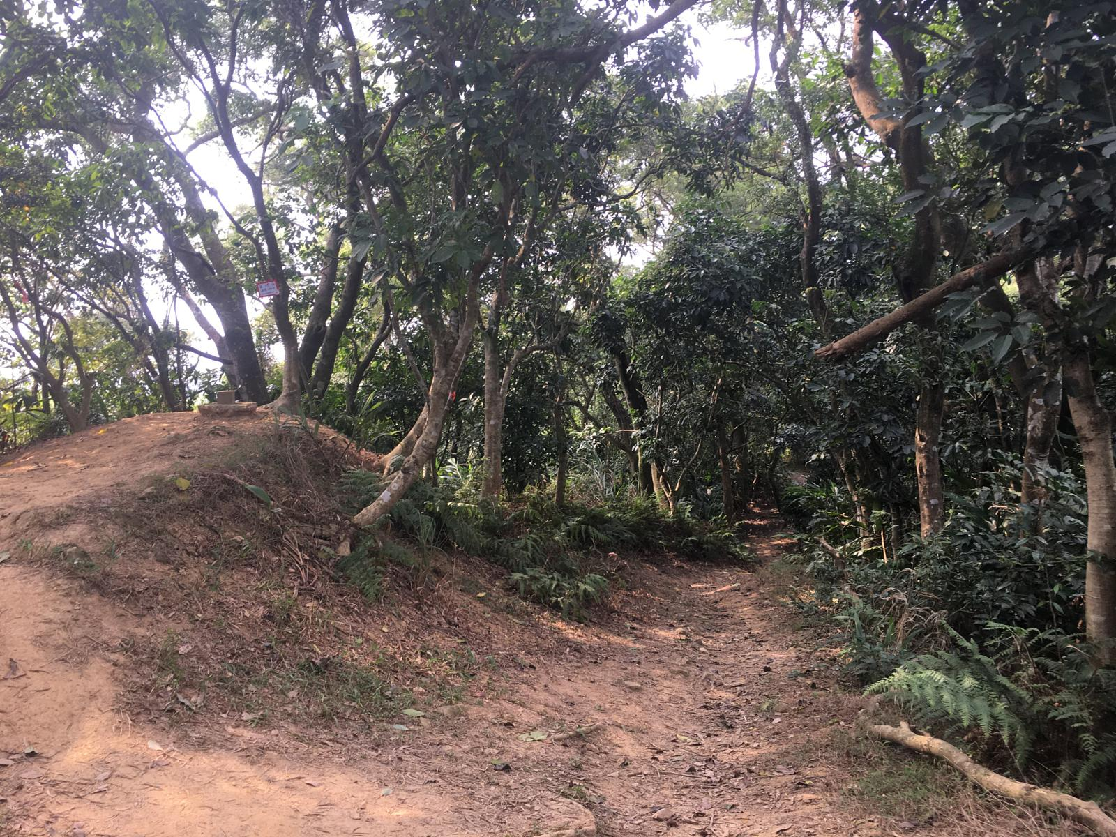 的照片 Taipei Grand Hike - South Section 1